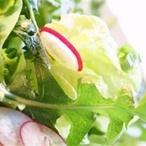 Pampeliškový salát s rajčaty