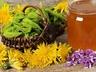 Pampeliškový sirup či med