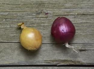 VIDEO: Jak snadno nakrájet cibuli