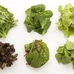 Salát mesclun