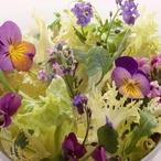 Jarní salát s maceškami Daniely Kolářové